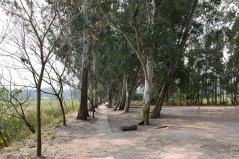 附近一帶樹林未受影響